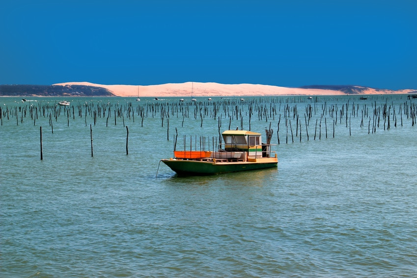 The Arcachon basin, a world apart between land and sea
