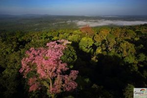 La Guyane, un rêve D'Amazonie