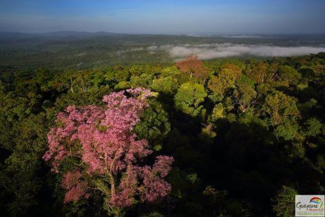 Guyana, an Amazonian dream