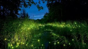 A fairy park with fireflies in China